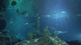 La escuela de pescados nada cerca de la superficie del agua, visión de debajo Luz del sol con bajo el agua almacen de metraje de vídeo