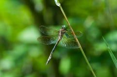 La esmeralda de Hine Imagen de archivo libre de regalías