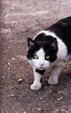La espera del ` s del gato Foto de archivo libre de regalías