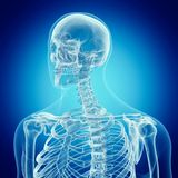 La espina dorsal superior stock de ilustración