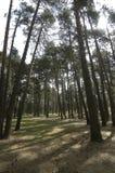 La Espineda森林 免版税库存图片