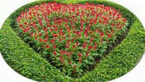 La esquina adornó la flor roja en público del jardín Imagen de archivo libre de regalías