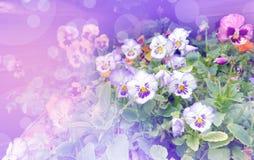 La esquina de la flor diaria con efecto luminoso Imagen de archivo
