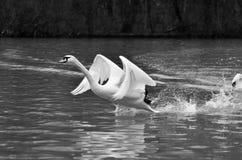 La estación de los pájaros del amor Fotografía de archivo libre de regalías
