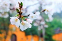 La estación de Sakura Fotos de archivo libres de regalías