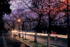 La estación de Sakura Imagen de archivo libre de regalías