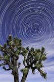 La estrella arrastra a Joshua Tree National Park Spring Foto de archivo libre de regalías