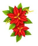La estrella de la Navidad florece la poinsetia con la cinta del oro Imágenes de archivo libres de regalías