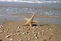 La estrella en agua Fotografía de archivo