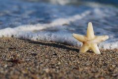 La estrella en la playa Foto de archivo