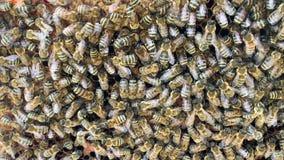 La estructura abstracta del hexágono es panal de la colmena de la abeja llenada de la miel de oro almacen de metraje de vídeo