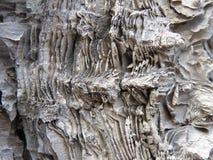 La estructura acodada del abedul de la reliquia de la corteza Foto de archivo