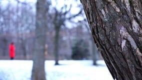 La estructura de la corteza de un tronco de árbol en bosque del invierno almacen de metraje de vídeo