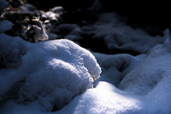 La estructura de la nieve Foto de archivo libre de regalías
