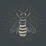 La etiqueta del vintage, abeja dibujada mano, grunge texturizó la insignia, plantilla retra del logotipo, ejemplo del vector del  Imagenes de archivo