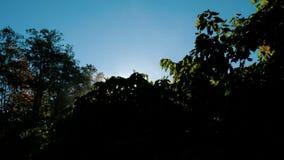 La evaporación en el árbol, vapor de la mañana sube en el sol en el amanecer almacen de metraje de vídeo