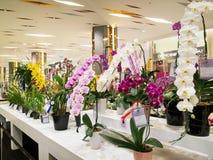 La exhibición floral en Tailandia 2014 Imagen de archivo libre de regalías