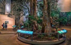La exposición interior en Hong Kong Museum de la historia exhibe la naturaleza del ecosistema terrestre local fotos de archivo libres de regalías