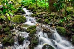 La exposición larga de la cascada de la cala tiró en la selva tropical de la isla de Oahu imágenes de archivo libres de regalías
