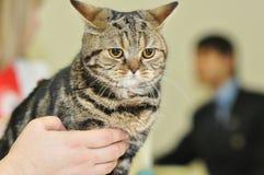 La exposición de gatos Foto de archivo libre de regalías