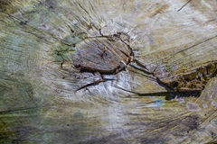 La extremidad del tocón viejo 2 Fotos de archivo libres de regalías