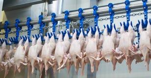 La fabbrica del pollo Fotografia Stock