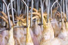 La fabbrica del pollo Fotografia Stock Libera da Diritti