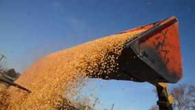 La fabbrica dell'alimento, l'alimento, il cereale, trattore sta scaricando i grani del grano archivi video