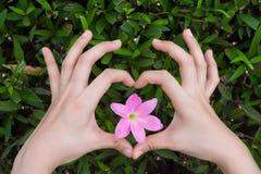 La fabbricazione femminile ama la forma del cuore a mano intorno al fiore con il fondo verde delle foglie immagini stock
