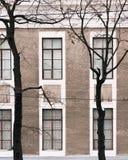 La facciata della costruzione con alto Windows Alberi senza fogli Fotografie Stock Libere da Diritti