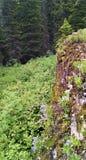 La falaise de chaux avec l'été fleurit en parc national de glacier Photographie stock libre de droits