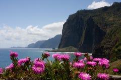 la falaise fleurit le rose Photos libres de droits