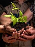 La famiglia degli agricoltori passa la tenuta della plantula fresca Immagini Stock