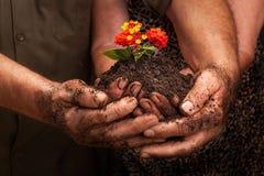 La famiglia degli agricoltori passa la tenuta della plantula fresca Fotografia Stock Libera da Diritti