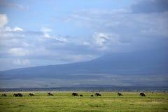 La famiglia degli elefanti attraversa la savana immagine stock