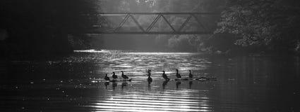 La famiglia delle anatre si distende sull'acqua Fotografia Stock Libera da Diritti