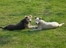 La famiglia di cane Fotografia Stock