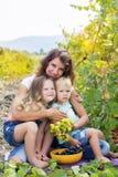 La famiglia sta tenendo il buhch dell'uva in vigna Fotografia Stock
