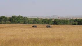 La familia africana de elefantes con un bebé se pasa a través de la sabana metrajes