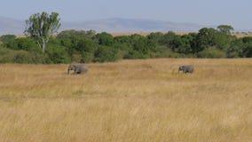 La familia africana de elefantes con un bebé se pasa a través de la sabana almacen de video