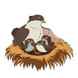 La familia de pájaros mima al pájaro con sus dos bebés en la jerarquía Fotografía de archivo libre de regalías