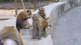 La familia de tomar marrón del mono se cuida almacen de metraje de vídeo