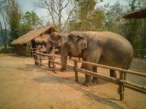 La familia del elefante es feliz en el pequeño corral de madera imagenes de archivo