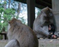 La familia del mono se sienta en pasos en el mono Forrest imagenes de archivo
