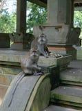 La familia del mono se sienta en pasos en el mono Forrest fotos de archivo libres de regalías