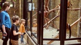 La familia en la mirada del parque zoológico en los animales a través de una gafa de seguridad fotos de archivo