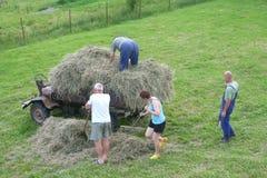 La familia entera está cosechando el heno Fotografía de archivo
