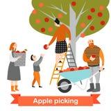 La familia feliz está escogiendo manzanas en el jardín Tiempo de cosecha Los niños ayudan a sus padres en la granja Fotos de archivo libres de regalías