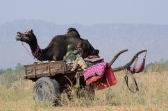 La familia gitana se está preparando al día de fiesta justo del camello tradicional en campo nómada en la ciudad sagrada de Pushk Imagen de archivo libre de regalías