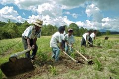 La familia india guatemalteca trabaja en campo de maíz Fotografía de archivo libre de regalías